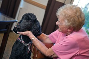 Quebec Long-Term Care Resident and Pet